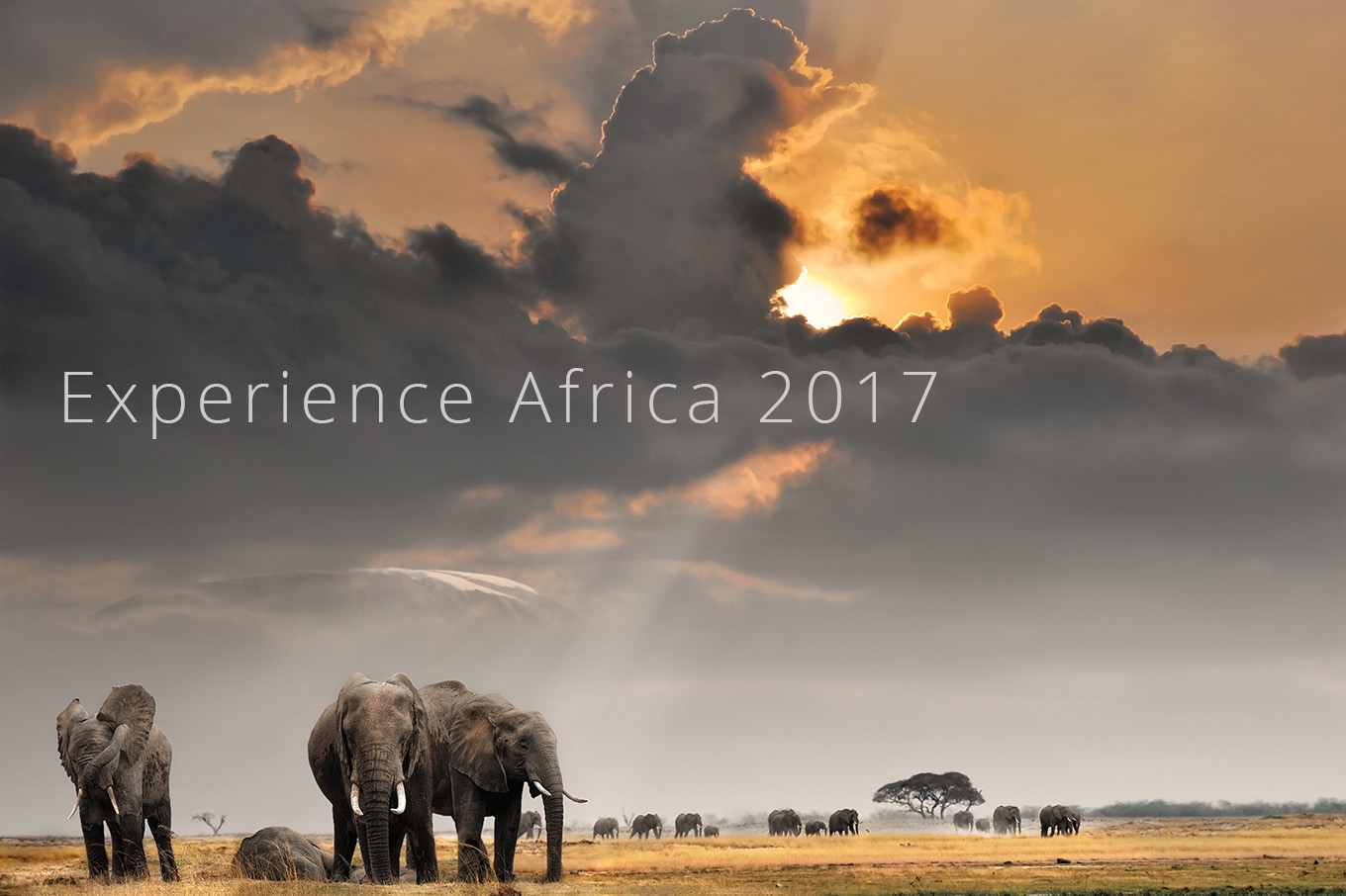 expereince_africa1_2017