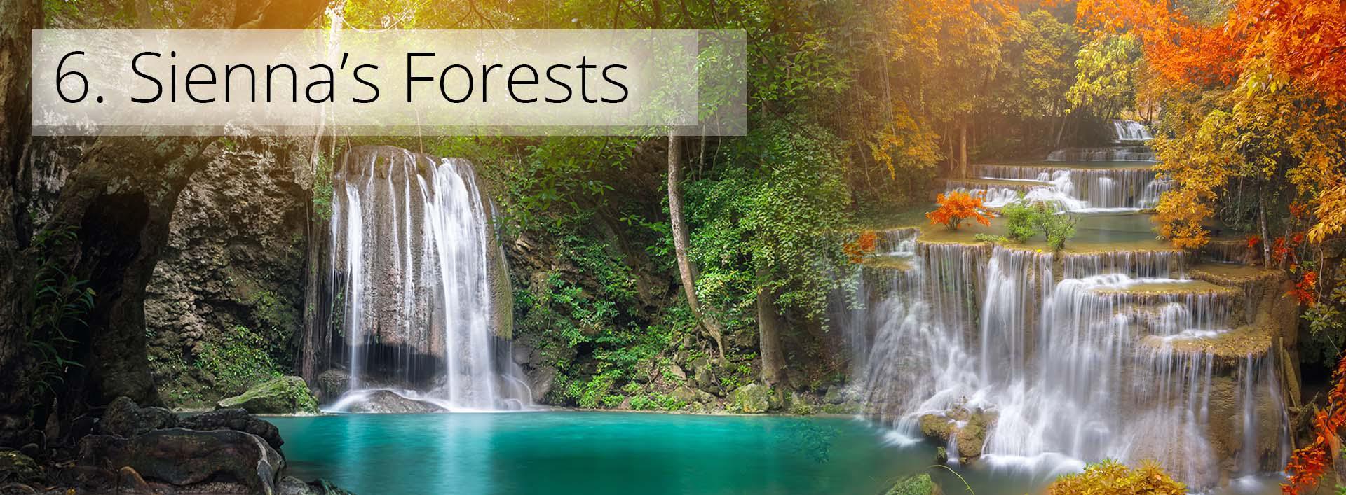 Siennas Forest